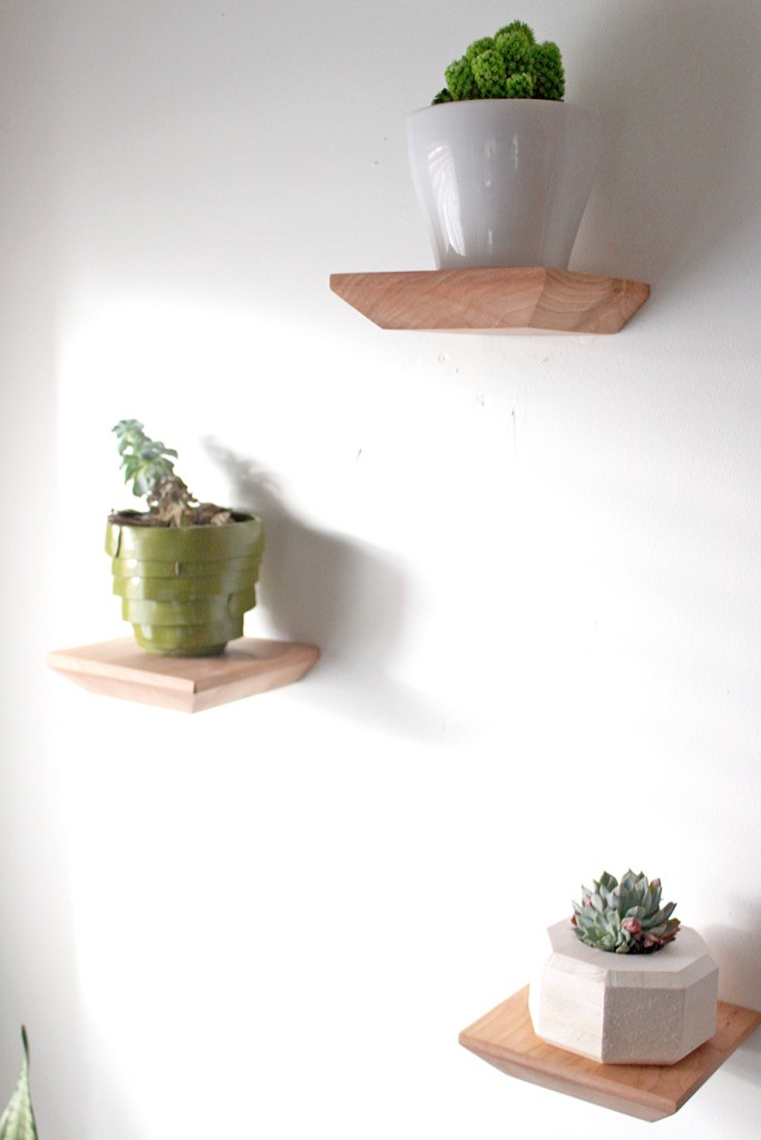 succulent-shelves