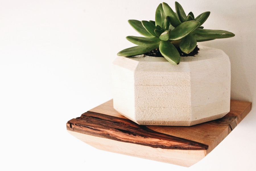BEAUTIFUL WOODEN SHELVES WITH LIVE EDGE- PERFECT FOR SUCCULENTS